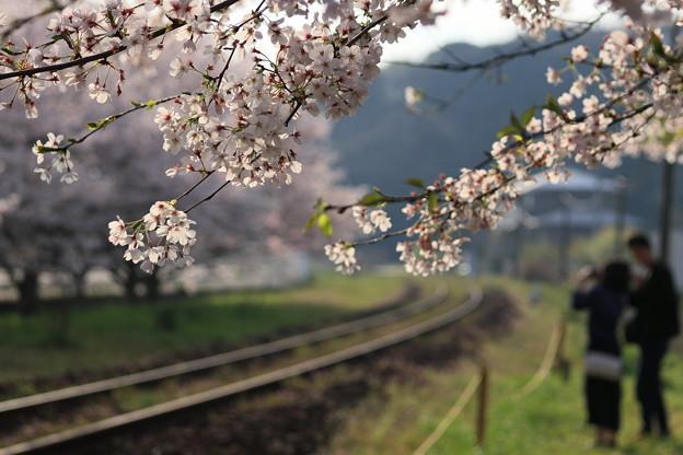 ☆沿線の桜