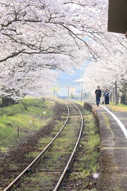 ☆桜のプラットホーム