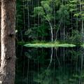 写真: 湖畔の小島