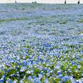 Photos: 花畑