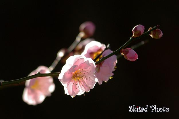 写真: 淡色の春