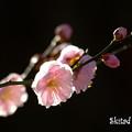 Photos: 淡色の春