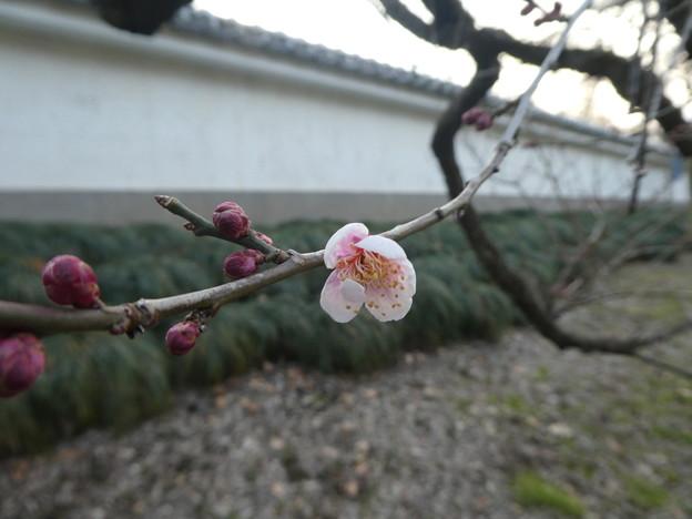 弘道館横塀 鈴鹿の関
