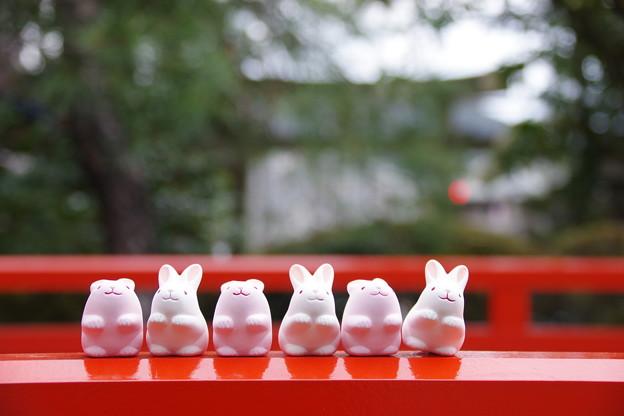 ウサギ神社