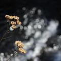 写真: 冬の光2