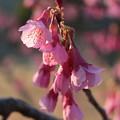 Photos: いろんな桜1