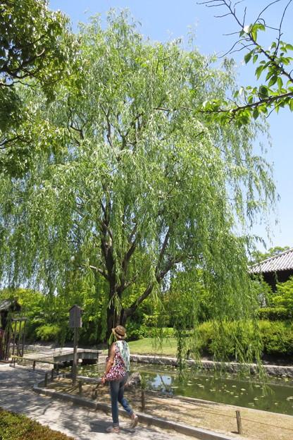 小野道風ゆかりの柳
