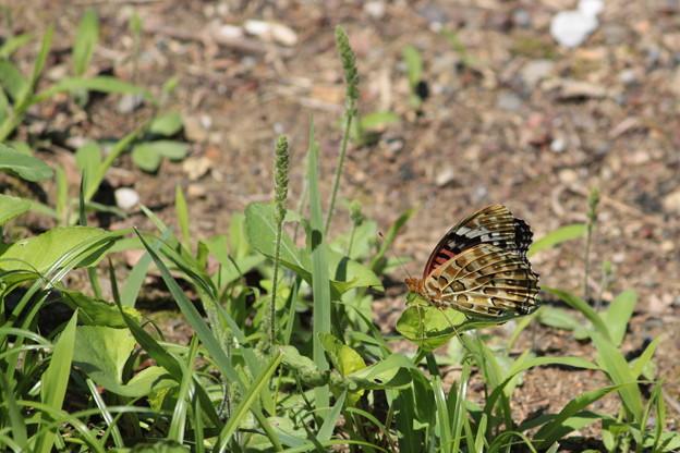 初夏の昆虫たち1