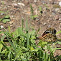 Photos: 初夏の昆虫たち1