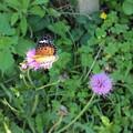 初夏の昆虫たち2