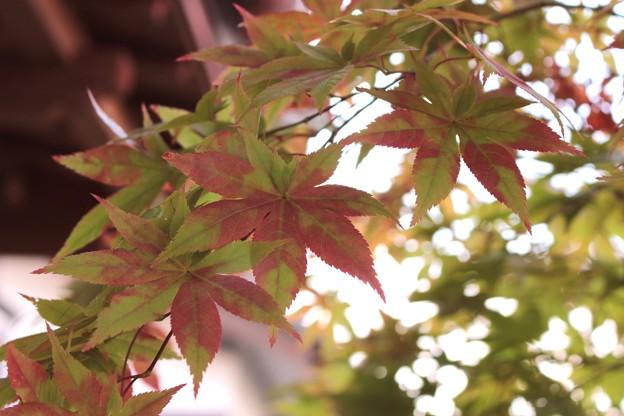秋の訪れ・・・