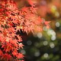 写真: 錦秋2