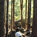 Photos: 林の中