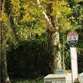 バス停の秋