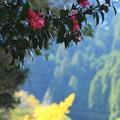 写真: 秋から冬へ