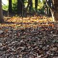 写真: 枯葉よ~♪