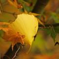 写真: 落ち葉3