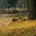写真: 初冬の風景1