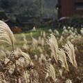 写真: 初冬の風景2