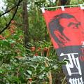 写真: 西郷(せご)どん 2