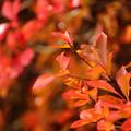 写真: 初冬の赤