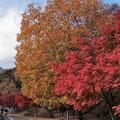 Photos: 紅黄