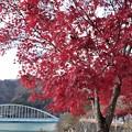 Photos: 丹沢湖畔