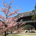 Photos: 日本の春