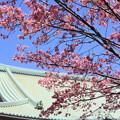 Photos: 日本の桜