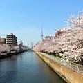 Photos: 猿江橋から