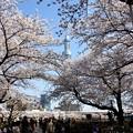 Photos: 花見日和