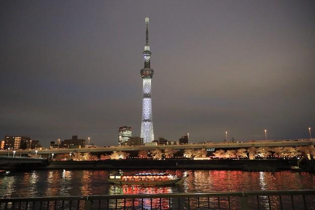 Photos: 夜桜クルーズ