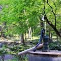 Photos: 木立の井戸
