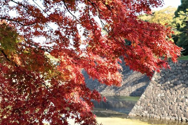 紅葉の東御苑