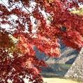 Photos: 紅葉の東御苑