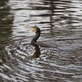 Photos: 野鳥公園