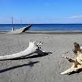 Photos: 房総の海岸