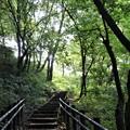 木立の階段
