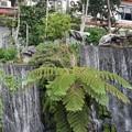 Photos: 台北龍山寺