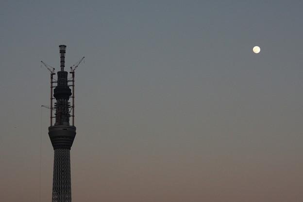 2011.1冬の月