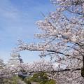 Photos: 桜は7分咲き橋の上は満開