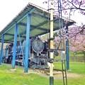 写真: SLと桜