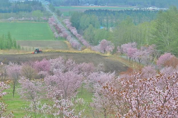 桜六花公園の展望台から2