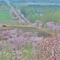 Photos: 桜六花公園の展望台から2