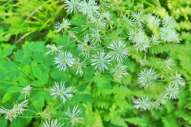 野草園の花