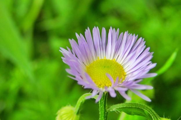 坂の途中で見つけた花