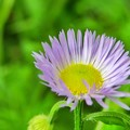 Photos: 坂の途中で見つけた花
