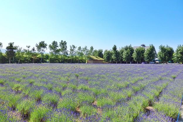 Photos: 倖の畑