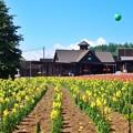 Photos: 花人の畑
