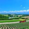 Photos: 四季彩の丘から遠くの丘を眺める